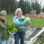 Volunteer helps produce bountiful harvest