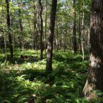 Sisters contribute 105 acres to Laurel Ridge State Park